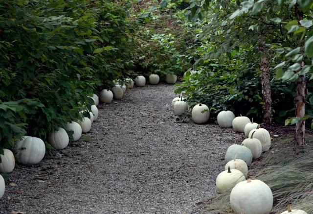 Autumn path of white pumpkins via Pretty Pink Tulips