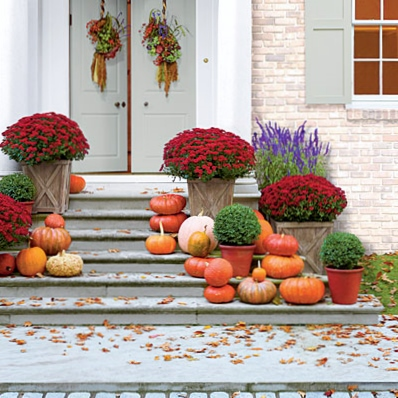 Pumpkins-mums-salvias-boxwood-fall-container-beautiful!!